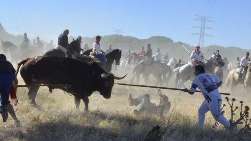 Celebracion-torneo-Toro-Vega-Tordesillas_EDIIMA20130917_0279_22